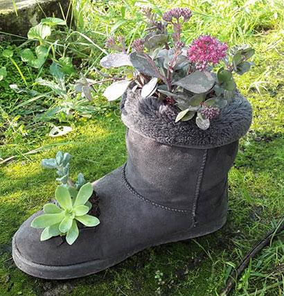 bouture_pepiniere_arc_en_fleurs_plantes_grasses