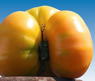 Tomate_Ananas